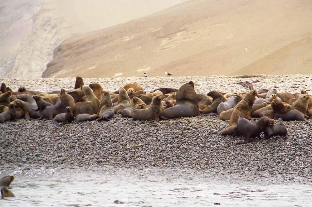 8. Islas Ballestas que ver en Perú