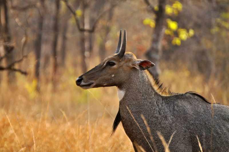 vida salvaje en Bandhavgarh