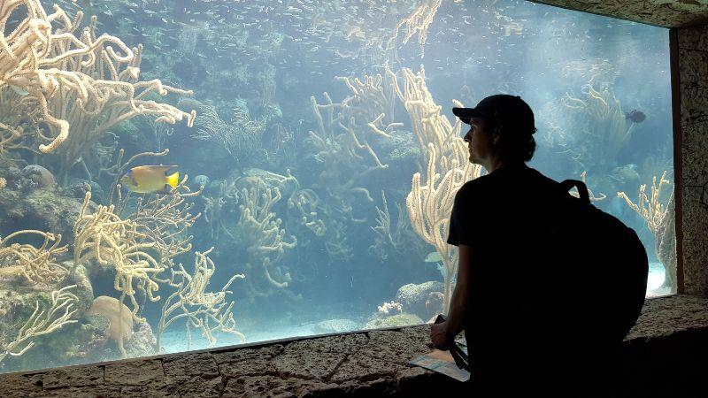 acuario Xcaret
