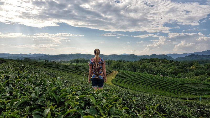 plantaciones de té que ver en Tailandia
