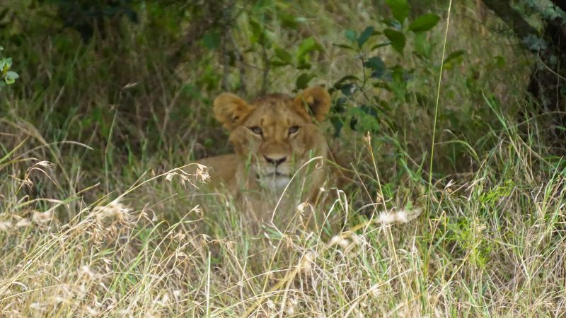 consejos para hacer un safari en Kenia