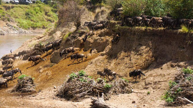 mejor época para hacer un safari en Kenia