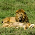 safari en el serengeti tanzania