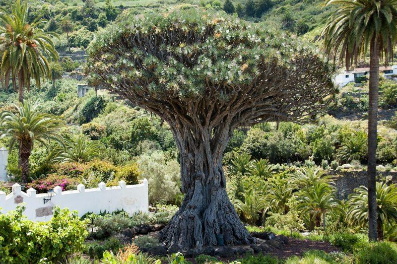 Parque Nacional del Teide de los mejores lugares que visitar en Tenerife
