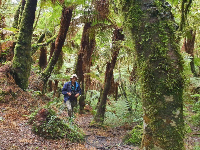 guía del trekking a los Helechos Gigantes en Bolivia